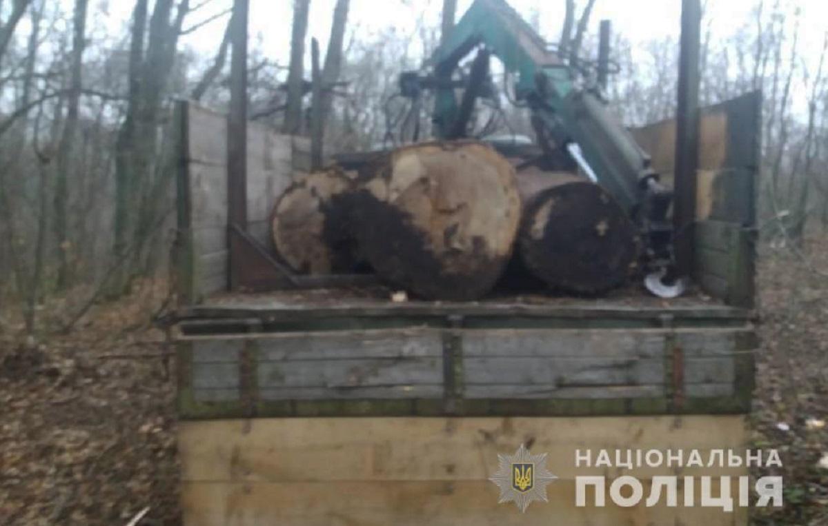 Без Купюр На Кіровоградщині затримали чоловіків, які незаконно вирубували дерева Кримінал  незаконна вирубка Національна поліція