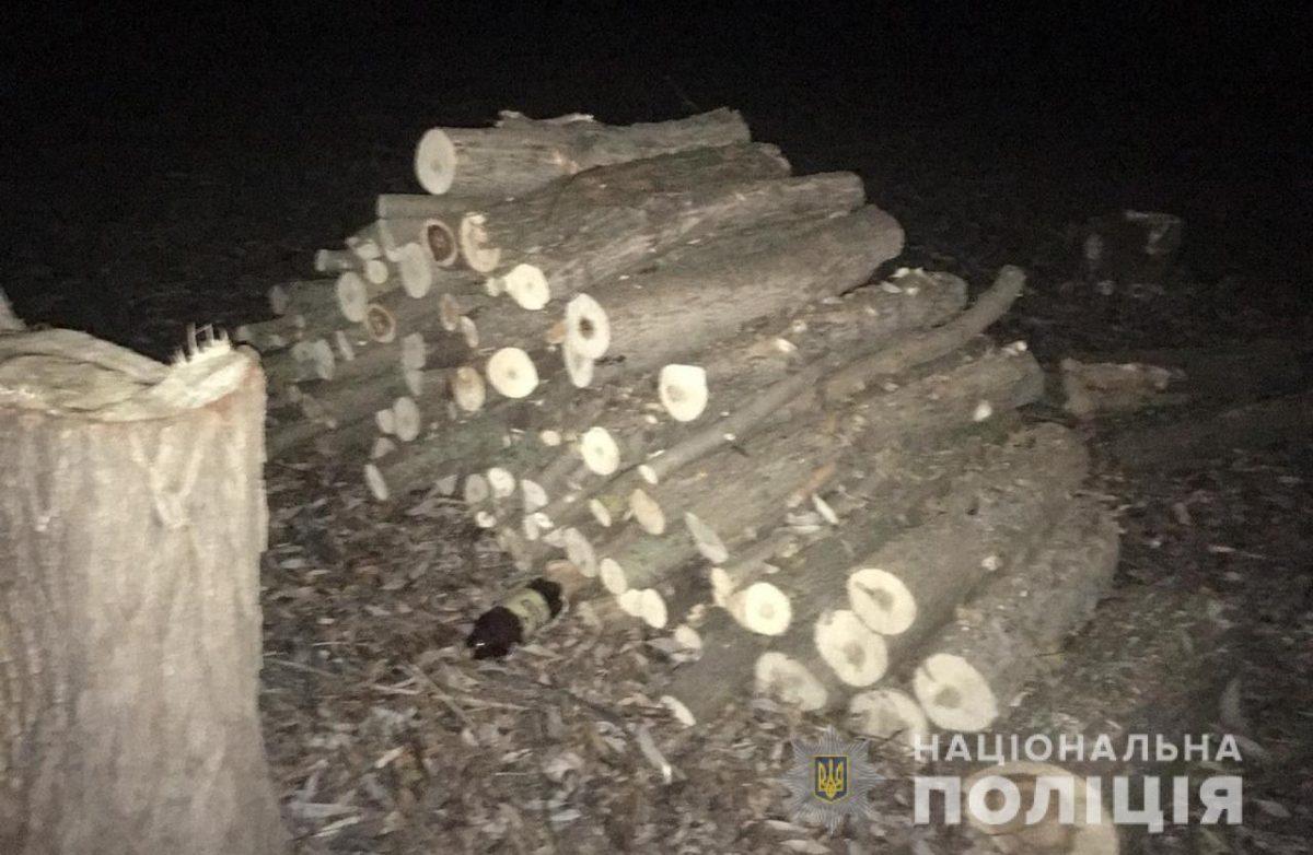 Без Купюр На Кіровоградщині викрили незаконну вирубку понад півтисячі дерев. ФОТО Кримінал  Вільшанський район вирубка дерев