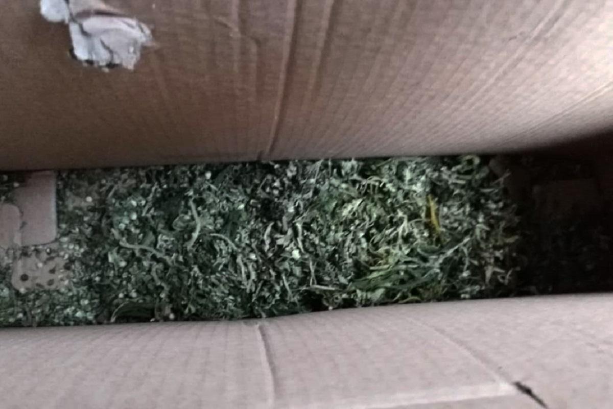 Без Купюр У двох жителів Кіровоградщини вдома знайшли зброю та наркотики Кримінал  наркотики зброя