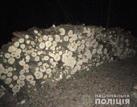 На Кіровоградщині викрили незаконну вирубку понад півтисячі дерев. ФОТО