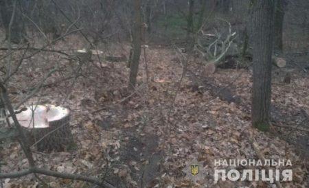 На Кіровоградщині затримали чоловіків, які незаконно вирубували дерева