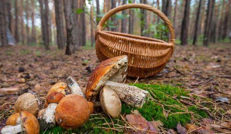 Жительку Кіровоградщини госпіталізували з підозрою на отруєння грибами
