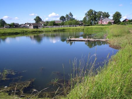 Прокуратура області повернула державі 8 гектарів водного фонду