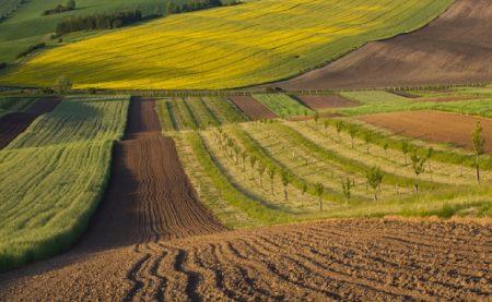 Кіровоградщина: виявлено 18 порушень земельного законодавства за тиждень