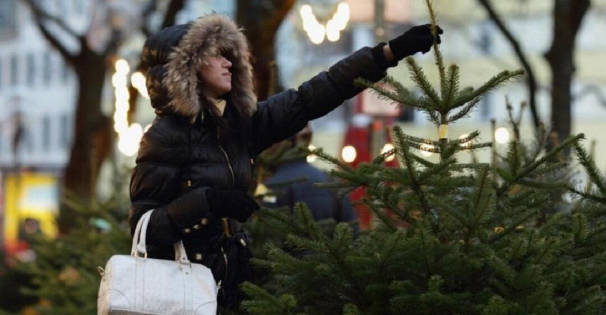 Без Купюр Де на Кіровоградщині продаватимуть ялинки Життя  ялинка