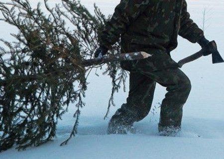 Держекоінспекція Кіровоградщини повідомила про розмір штрафу за незаконне вирубування ялинок