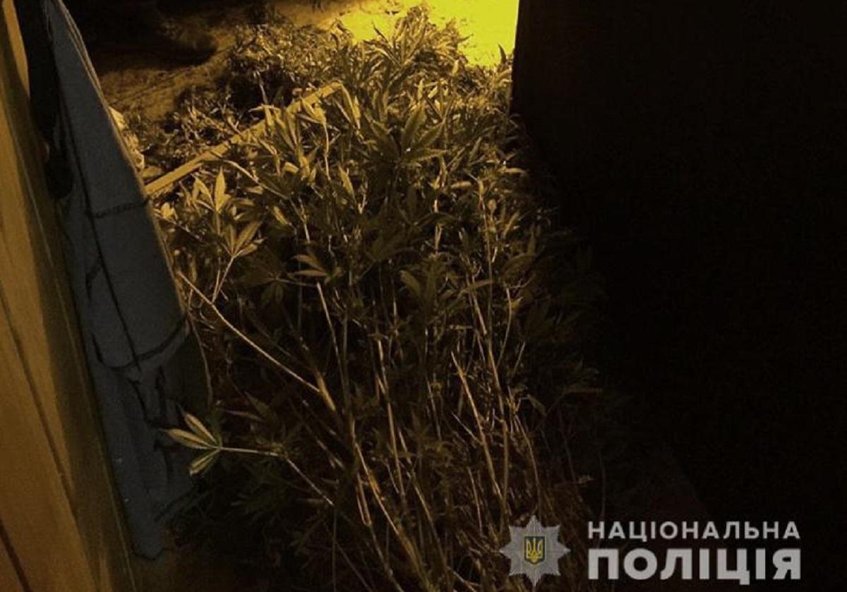 Без Купюр У жителя Кіровоградщини знайшли зброю та наркотики Кримінал  Національна поліція наркотики вилучили зброю 2020 рік