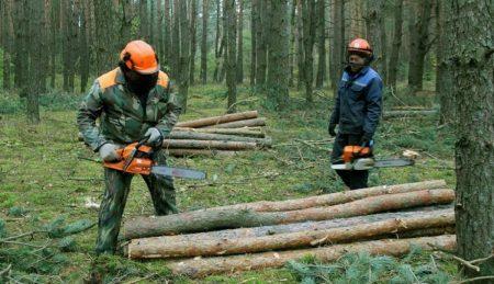 Трьох жителів Кіровоградщини підозрюють у незаконній порубці лісу