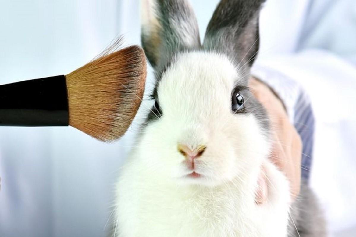 Без Купюр В Україні хочуть підвищити вимоги до косметики й заборонити випробування на тваринах Україна сьогодні  МОЗ Мінсоцполітики Кабмін ЄС 2020 рік