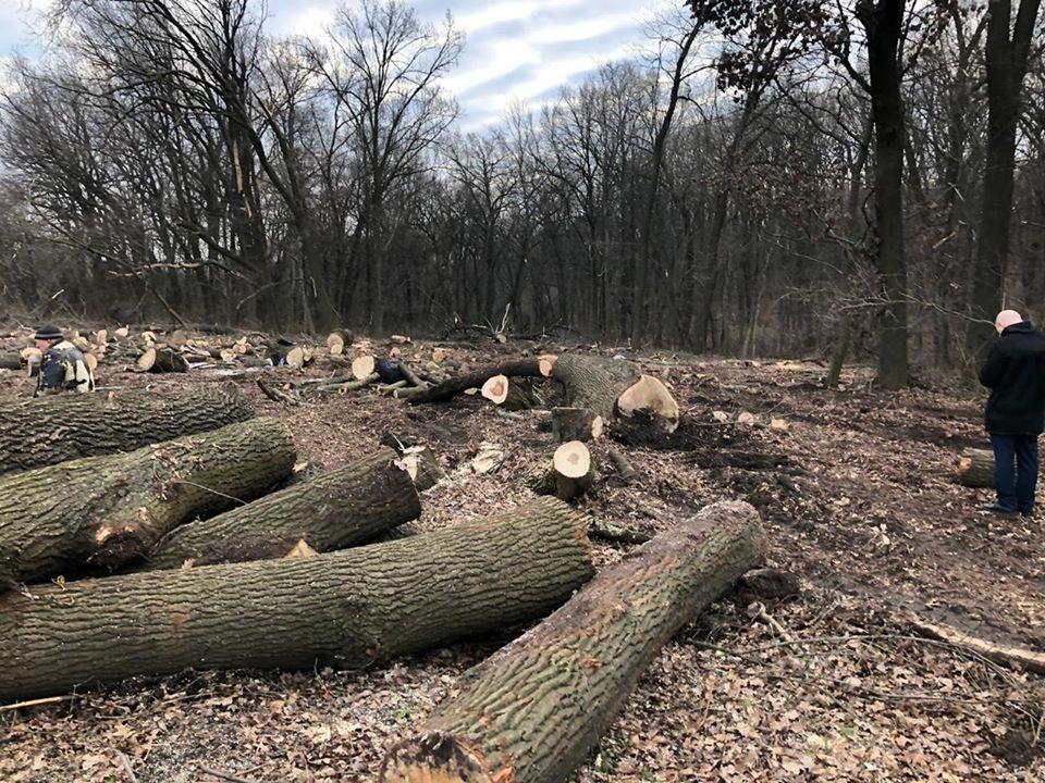 Без Купюр Онуфріївський лісгосп заперечує звинувачення в незаконній вирубці цінної породи дерев Життя  чорні лісоруби Онуфріївський район вирубка дерев 2020 рік