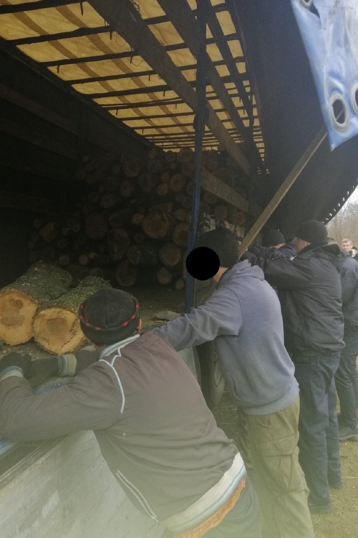 Без Купюр Лісорубу, який знищив майже на 3 мільйони дерев на Кіровоградщині, оголосили підозру Кримінал  чорні лісоруби підозра Кіровоградська обласна прокуратура 2020 рік