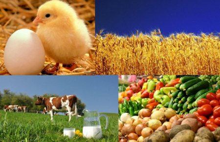 Кіровоградщина потрапила до п'ятірки областей за приростом виробництва сільгосппродукції