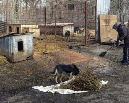 У притулку для тварин в селищі Новому влаштували суботник