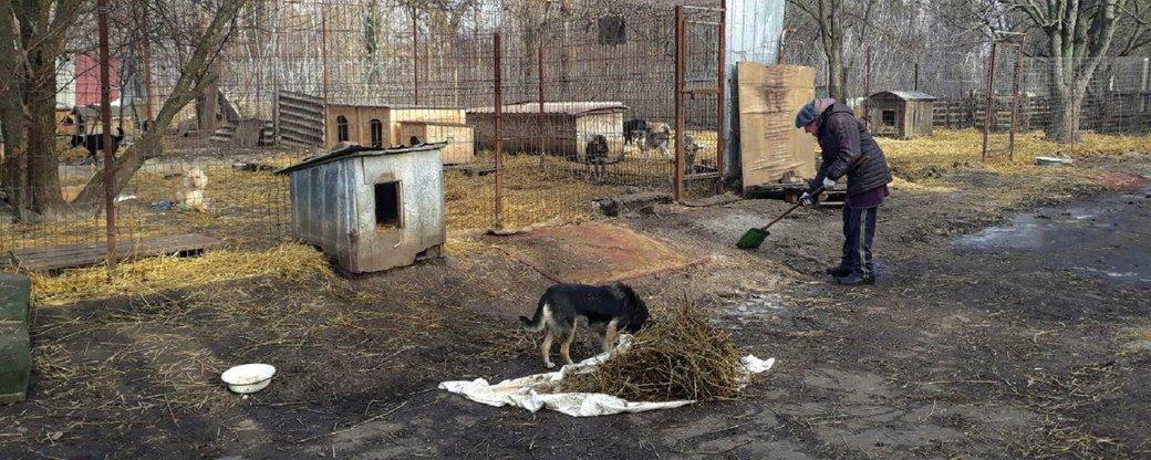 Без Купюр У притулку для тварин в селищі Новому влаштували суботник Події  щасливий пес селище Нове Кропивницький 2020 рік