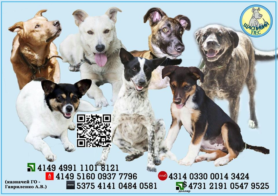 Без Купюр Притулок для тварин у Кропивницькому призупиняє діяльність Життя  щасливий пес благодійна допомога 2020 рік