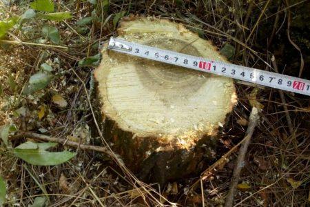 У Світловодську судитимуть полтавчанина за незаконну вирубку дерев