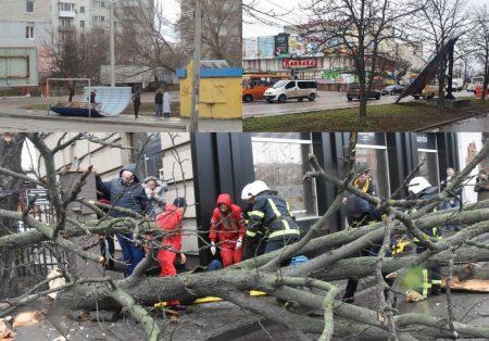Зірвані білборди, повалені дерева та одна постраждала – наслідки стихії в Кропивницькому й області. ФОТО