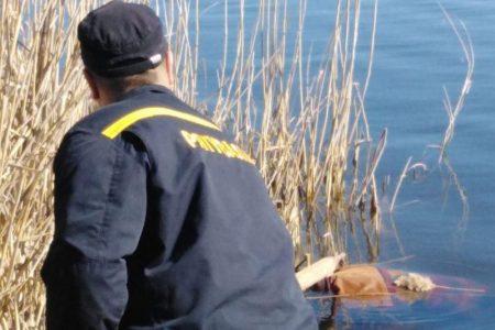 У Смоліному Маловисківського району в річці знайшли тіло чоловіка
