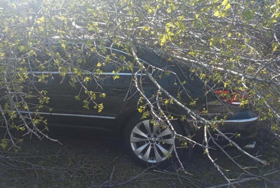 Без Купюр В Олександрії дерево впало на автівку Події  Олександрія ДСНС дерево авто 2020 рік