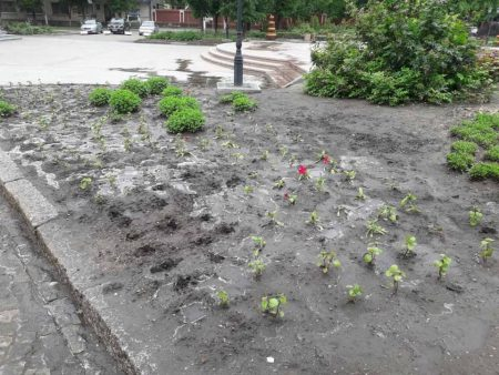 У Кропивницькому крадуть квіти з клумб, навіть перед судом у центрі міста