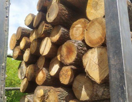 На Кіровоградщині судитимуть лісника, який допустив вирубку 300 дерев