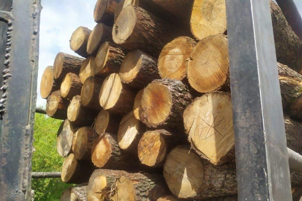 Без Купюр Жителя Знам'янського району судитимуть за незаконну порубку дерев Кримінал  порубка дерев новини Кіровоградщина 2021 рік