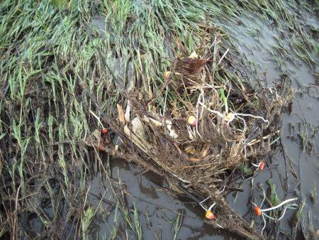 На Кіровоградщині злива та град пошкодили городину й посіви. ФОТО. ВІДЕО