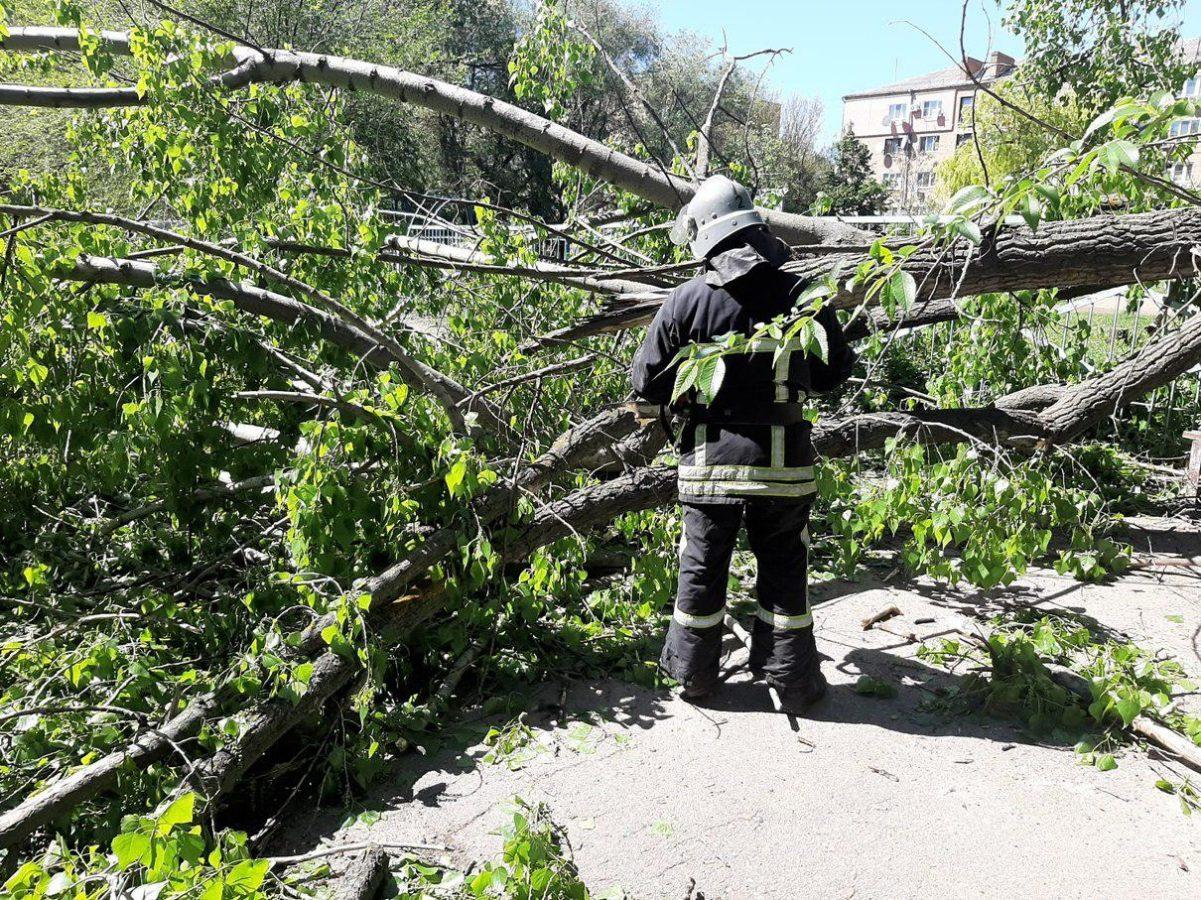 Без Купюр У Кропивницькому дерево впало на авто в дворі багатоповерхівки Події  дерево вітер 2020 рік