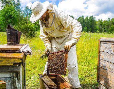 Пасічники з Кіровоградщини можуть отримати по 200 гривень за бджолосім'ю