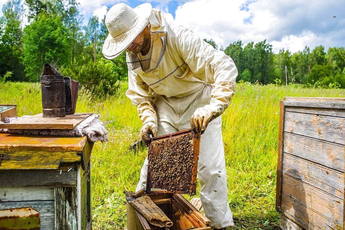 Без Купюр Пасічники з Кіровоградщини можуть отримати по 200 гривень за бджолосім'ю Бізнес  дотація бюджетна комісія бджолярство 2020 рік
