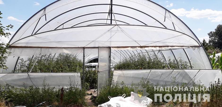 Без Купюр На Кіровоградщині поліцейські виявили теплиці з посівами близько тисячі рослин конопель. ФОТО Кримінал  поліція Мак 2020 рік