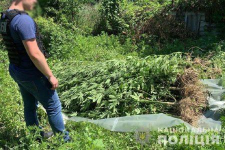 Правоохоронці затримали жителя Маловисківського району, який вирощував наркосировину