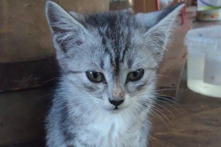 У Кропивницькому переповнений притулок для котів просить допомоги