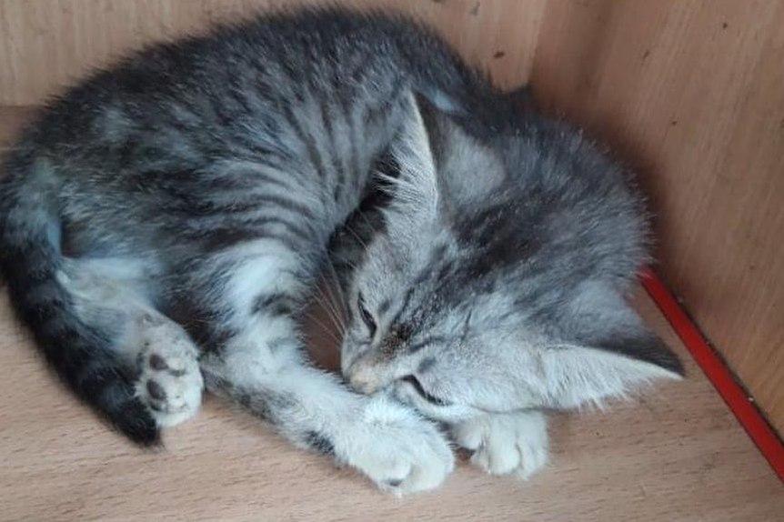 Без Купюр У Кропивницькому переповнений притулок для котів просить допомоги Благодійність  щасливий пес Кропивницький благодійна допомога 2020 рік