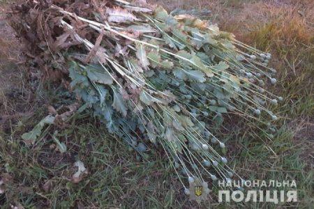 У жителя Кіровоградщини на городі знайшли понад 800 рослин маку