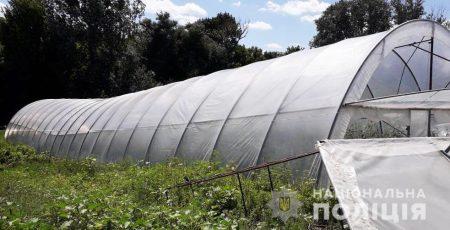 На Кіровоградщині поліцейські виявили теплиці з посівами близько тисячі рослин конопель. ФОТО