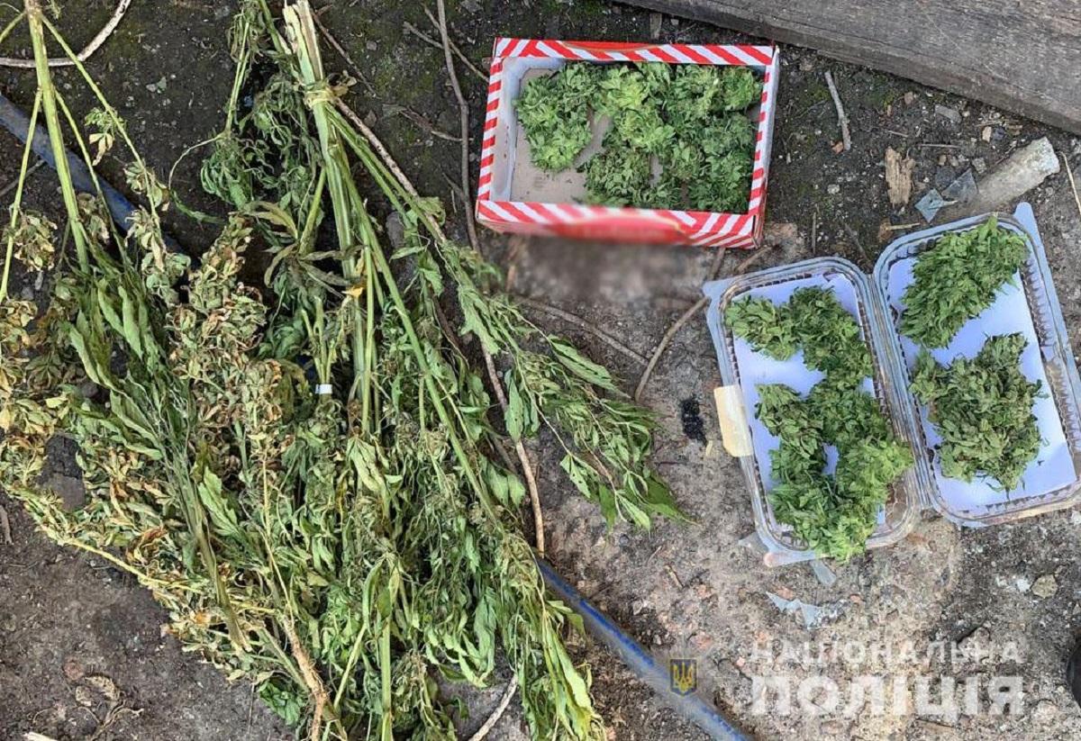 Без Купюр Правоохоронці затримали жителя Маловисківського району, який вирощував наркосировину Кримінал  наркотики Маловисківський район конопля 2020 рік