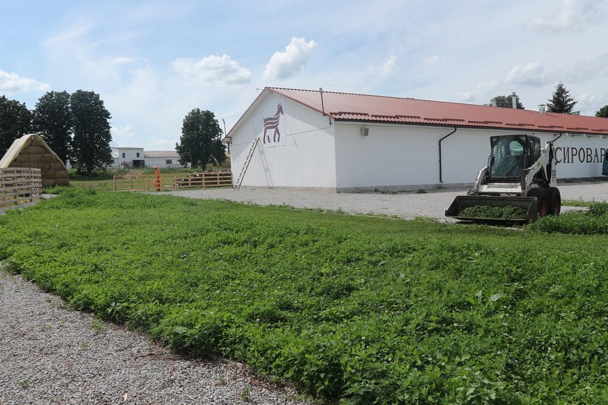 Де виробляють молоко богів та як прижилися альпійські кози на Кіровоградщині. ФОТО 3