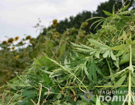 Протягом тижня на Кіровоградщині зафіксували нові випадки кору