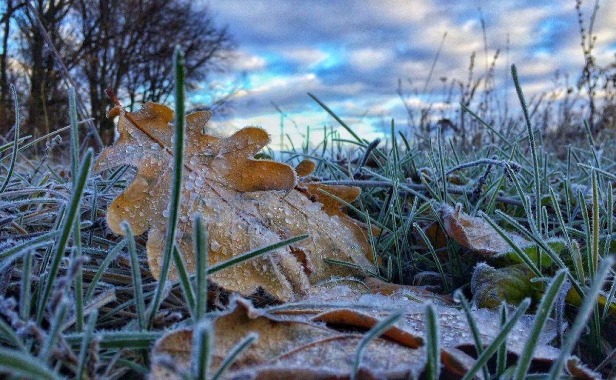 Без Купюр Синоптики попередили про заморозки на поверхні грунту в Кропивницькому та області Життя  синоптики новини Кіровоградщина заморозки 2020 рік