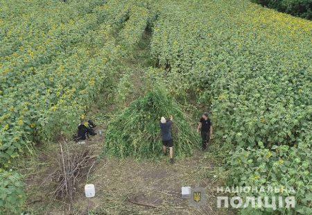 """Поліція завершила операцію """"Мак"""" на Кіровоградщині"""