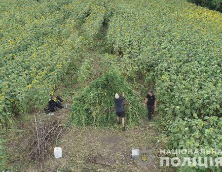У Кропивницькому Козачий острів віднесли до природно-заповідного фонду