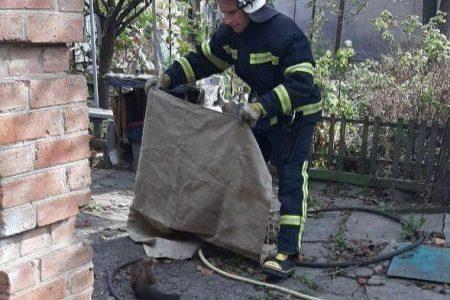 У Кропивницькому рятувальники ганялися за тхором. ФОТО