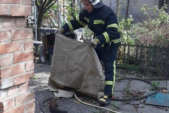 Без Купюр У Кропивницькому рятувальники ганялися за тхором. ФОТО Життя  тхір рятувальники новини Кропивницький 2020 рік