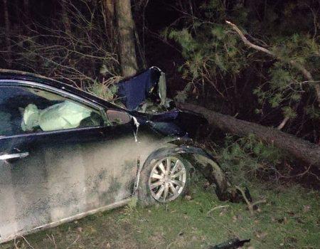 У Кропивницькому водій Toyota Camry в'їхав у дерево. ФОТО