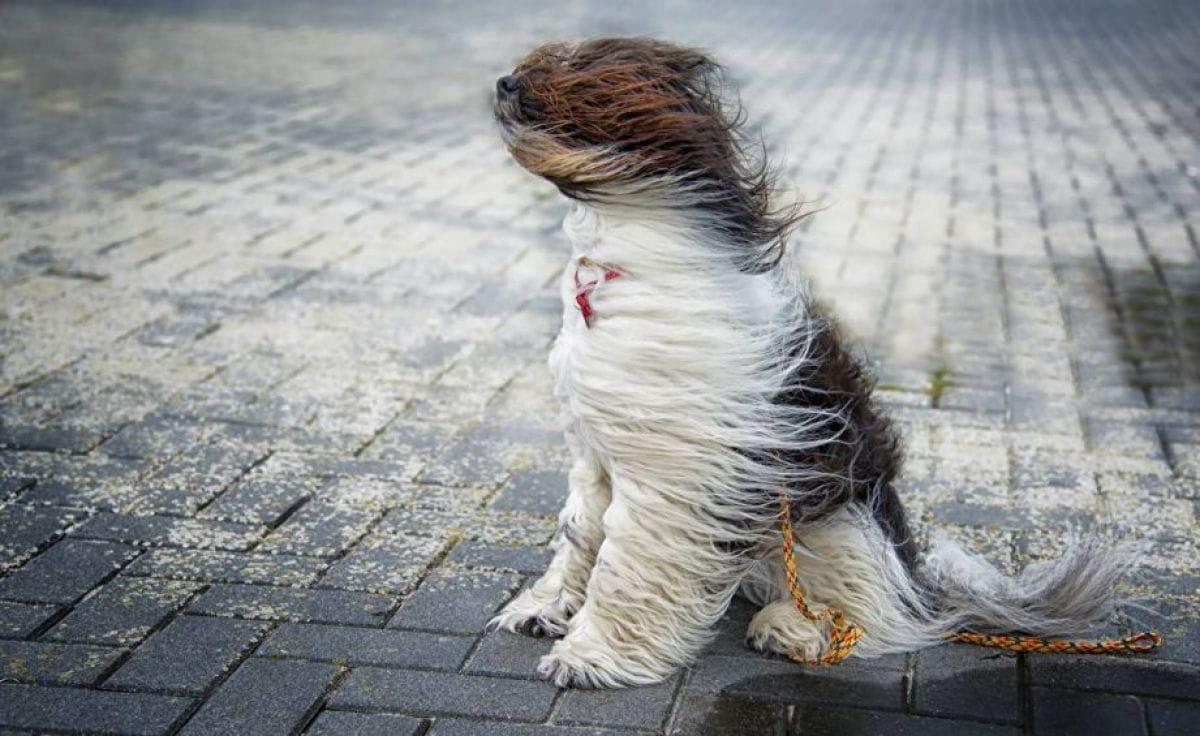 Без Купюр На Кіровоградщині оголосили штормове попередження Життя  штормове попередження новини Алла Наволокіна