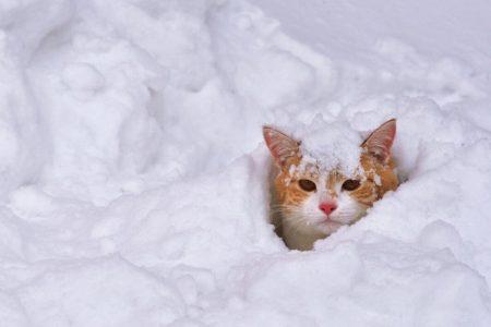 На Кіровоградщині очікуються мокрий сніг і хуртовини