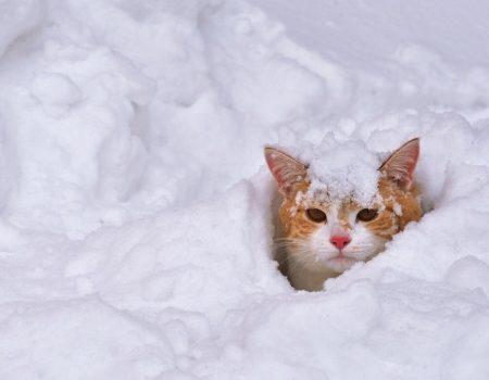 Метеорологи прогнозують наступного тижня на Кіровоградщині мокрий сніг