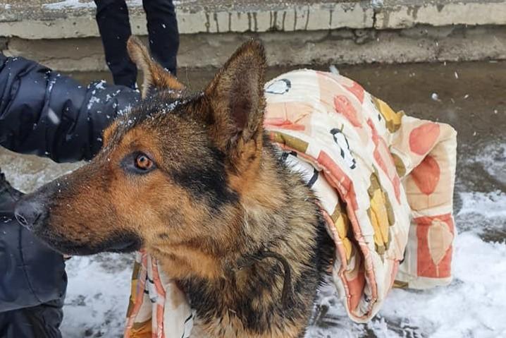 Без Купюр У центрі Кропивницького перехожий врятував собаку, що провалилася під лід. ФОТО. ВІДЕО Життя  собака порятунок новини Кропивницький Кіровоградщина 2021 рік