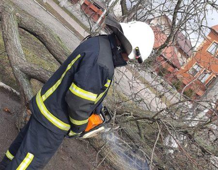 У Кропивницькому дерево впало на проїжджу частину